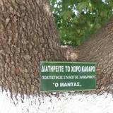 sintirisi-katharismos-palaias-vrisis-platania-8